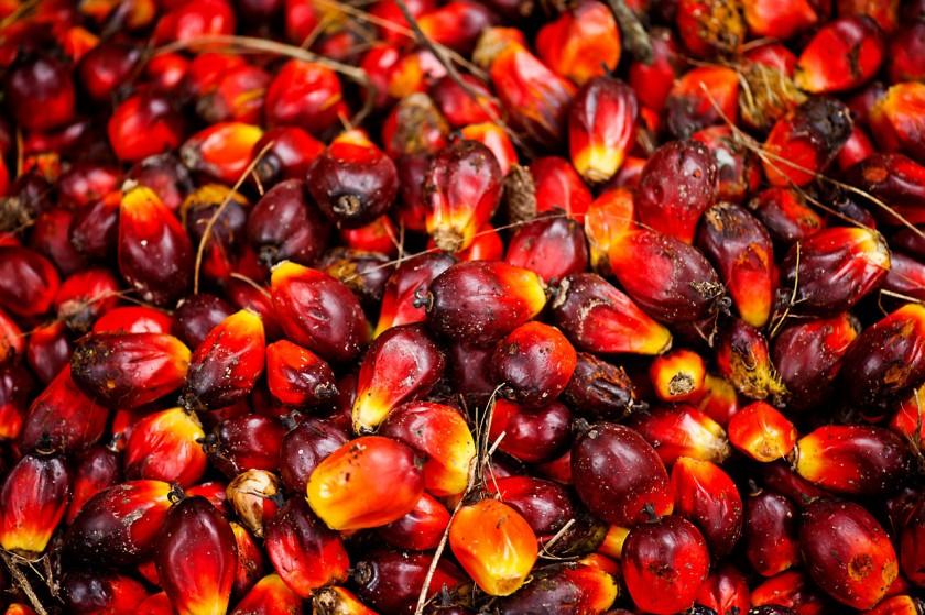 aceite de palma cancerigeno