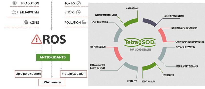 Algunos de los efectos que tiene TetraSOD® - foto 3